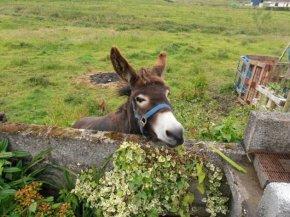 Jack the Donkey